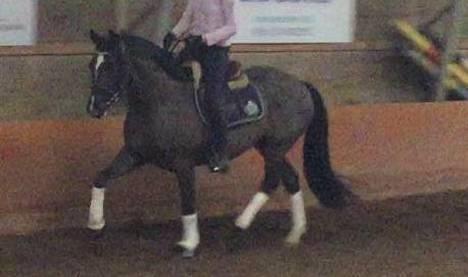 Anastettu hevonen on arvoltaan noin 30 000 euroa.