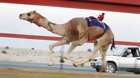 Kameliravit Dubaissa. Kohde on uuden listauksen mukaan kallein turistikohde.