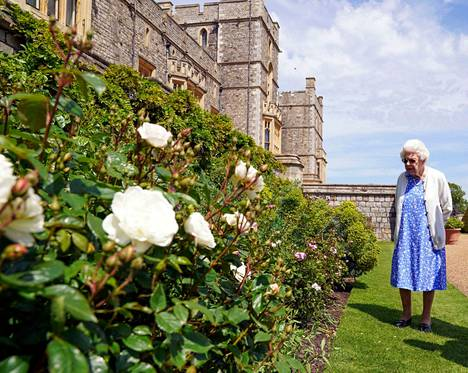 Kuningatar Elisabet ihasteli ruusutarhaa Windsorin linnan puutarhassa.