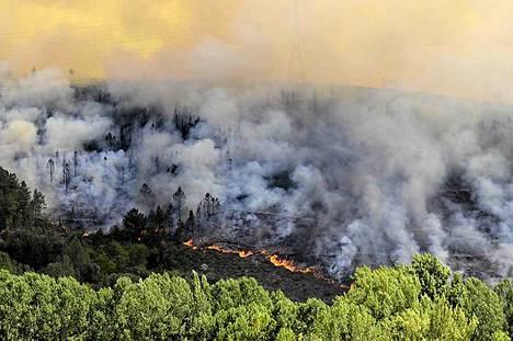 Metsä tulessa. Metsäpalo riehuu Veiga de Cascallaisin kylässä Galician maakunnassa Espanjan luoteisosassa. Espanjaa riivaa polttava helle ja pahin kuivuus yli seitsemään vuosikymmeneen. Satoja hehtaareja metsää roihusi ilmiliekeissä Galician maakunnassa ja Kanariansaarilla. Galiciassa tulen tieltä on evakuoitu ainakin kaksi kylää. Kanarialla tuli uhkaa tuhota Unescon maailmanperintökohteisiin kuuluvan Garajonayn luonnonpuiston La Gomeran saarella. Puistossa elää yli 450 kasvilajia, joista kahdeksaa ei esiinny missään muualla maailmassa. Garajonayn puistosta on jo palanut yli kymmenesosa. La Gomeran saaren viranomaisten mukaan tuhoutuneiden alueiden palaaminen ennalleen kestää vuosikymmeniä. Maastopalot ovat riivanneet aiemmin kesällä myös Teneriffan saarta Kanarialla.