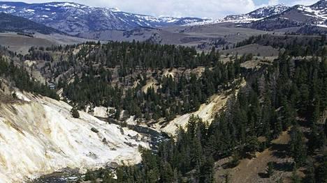 Yellowstonen kansallispuistossa tapahtui kamala onnettomuus.