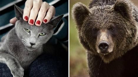 Kissa, listalla kolme kuolemaa ja karhu jolla on yksi kuolema. Kuvan kissa ja karhu eivät tiettävästi ole yhdenkään kuoleman takana.