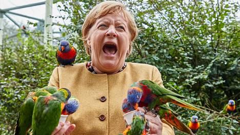 Värikkäät sateenkaarilorit hakivat hanakasti nektaria Angela Merkelin kädestä. Yksi linnuista nokkaisia kansleria.