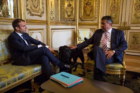 Ranskan presidentti Macron toi rakkaan koiransa tapaamiseen.