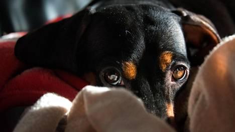 Turkinkuivauskaappi, hyvinvointia, joululahja jopa naapurin koiralle... – lemmikkeihin kulutetaan yhä enemmän rahaa
