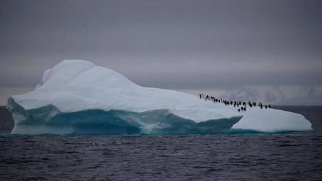 Pingviinejä jäävuoren päällä arkistokuvassa.