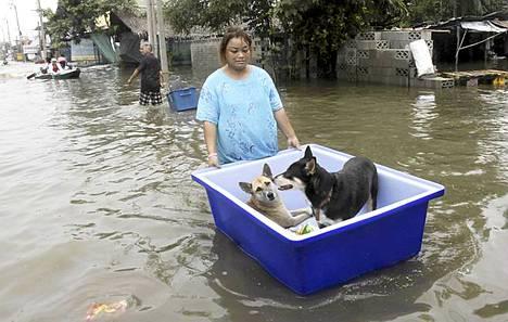 Nainen kuljetti koiriaan muoviastiassa.