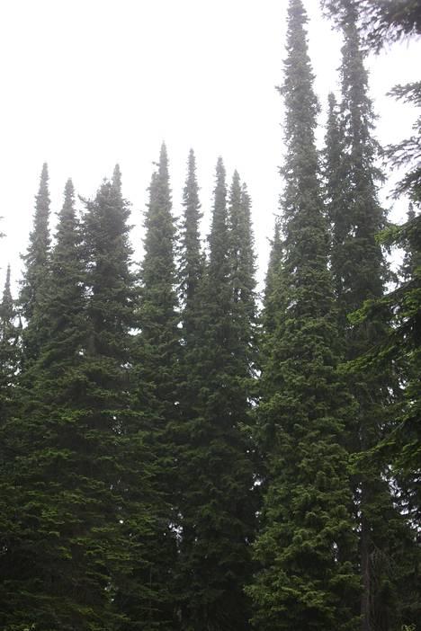 Arboretum Mustila on Suomen merkittävin puulajipuisto.