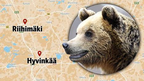 Poliisin mukaan karhu on saattanut vaihtaa maisemaa Hyvinkäältä Riihimäelle.