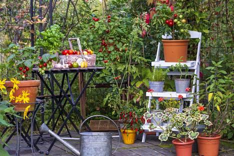 Paviljonki puutarhassa.