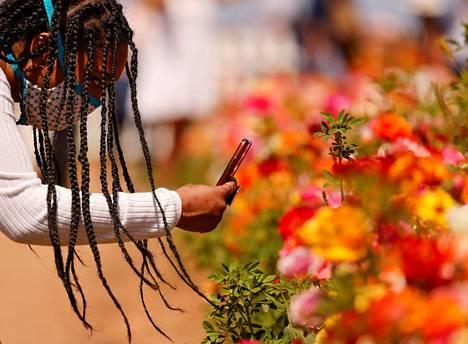 Carlsbadin kukkakedot ovat yleisölle avoinna pitkälle toukokuuhun.