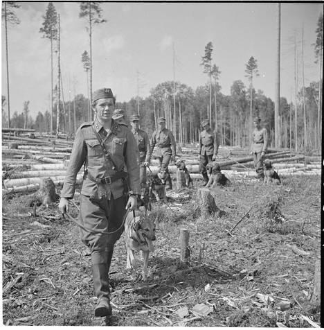 Sotakoirien koulutusta (II/JR 8) etulinjakomppaniassa.
