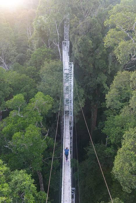 Ulu Temburongin kansallispuiston kohokohta on kukkulalle metsän keskelle, puiden latvojen ylle tehdyt riippusillat. Vain pieni pala puistosta on auki vierailijoille, jotta luonto säilyy koskemattomana.
