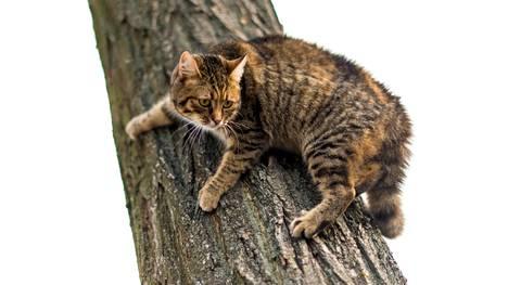 Kuvituskuvan kissa ei esiinny jutussa.