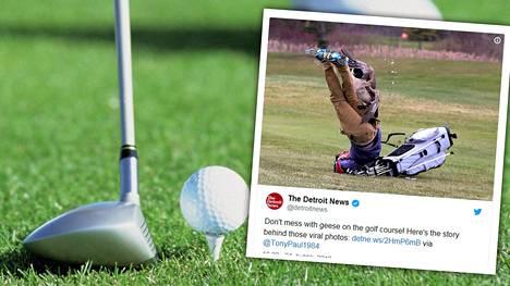 """Hanhi hyökkäsi lukiolaispojan kimppuun golfkentällä – huikeasta kuvasarjasta tuli nettihitti: """"Se oli hullua"""""""