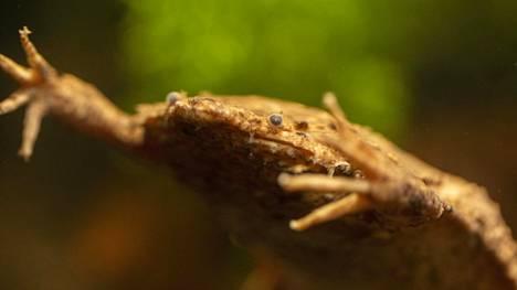 Eläintarha tiedotti sammakkouutuudesta keskiviikkona.