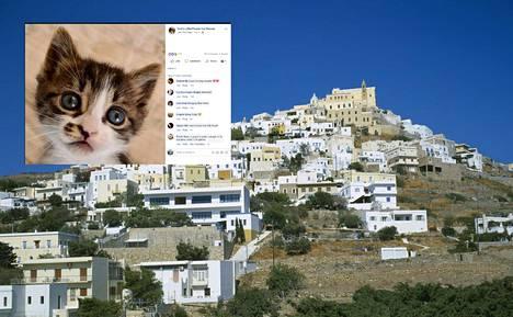 Löytökissatalo etsii tälle saarelle vastuullista ja huolellista hoitajaa 55 kissalle.
