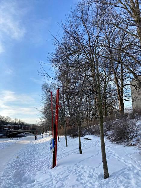 Paljaat kirsikkapuut sulautuvat talvimaisemaan.