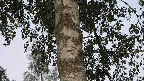 Elvis puussa. Näetkö?