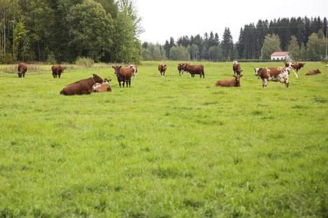 Nurmi on yksi harvoista kasveista, jonka viljelyyn Suomen ilmasto-olot antavat suhteellista kilpailuetua. Lehmä pystyy muuttamaan ruohon ihmiselle kelpaavaksi ravinnoksi. Suomessa lehmille ei syötetä soijaa.