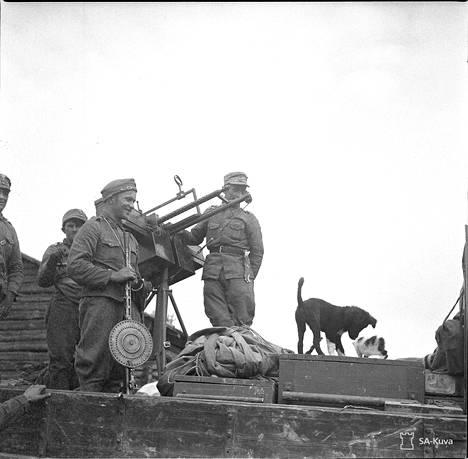 Venäläisiltä jääneet kissa ja koira it-kk-auton lavalla. Pajari 1941.08.04