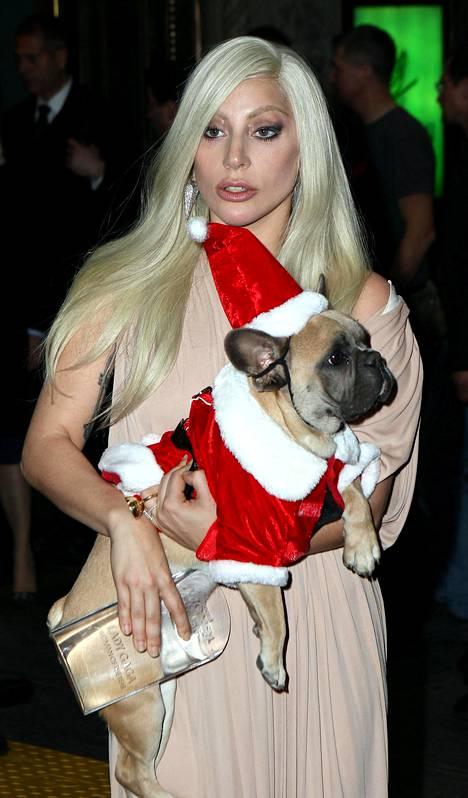 Lady Gagalla on ollut vuosien varrella useita ranskanbulldoggeja.