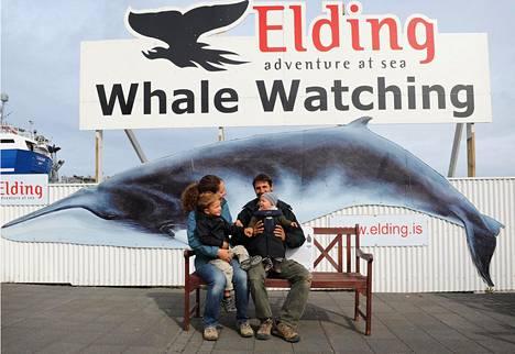Reykjavíkin lähivesillä näkee varmimmin delfiinejä, pyöriäisiä ja lahtivalaita, toisinaan myös ryhä- ja miekkavalaita. Kesällä valaita on eniten.