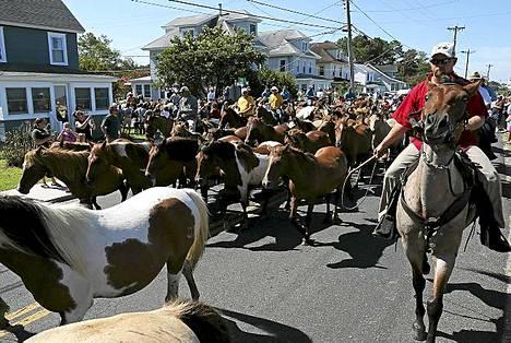 Ponihuutokauppa. Poneja näyttelyalueella Chincoteaguen saarella Virginiassa Yhdysvalloissa. Ponihuutokaupan järjestää vuosittain Chincoteaguen vapaapalokunta.