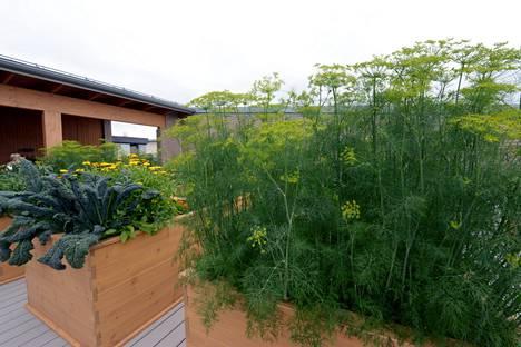 Sahapihan huipun kattoterassilta löytyy myös asukkaiden käytössä olevia istutuslaatikoita, joiden avulla viljely on tuotu osaksi kerrostaloasumista.