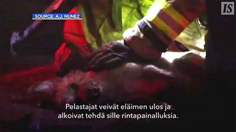 Tulipalosta pelastettu koira elvytetään painelulla ja happimaskilla – videon lopputulos koskettaa