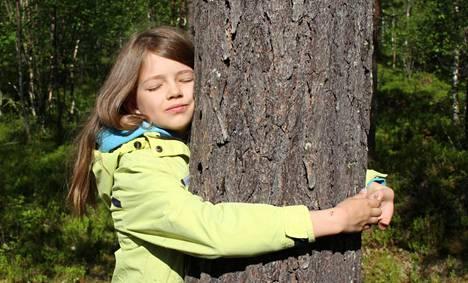 Levin HaliPuu-metsässä järjestetään elokuussa Puunhalauksen MM-kilpailut.