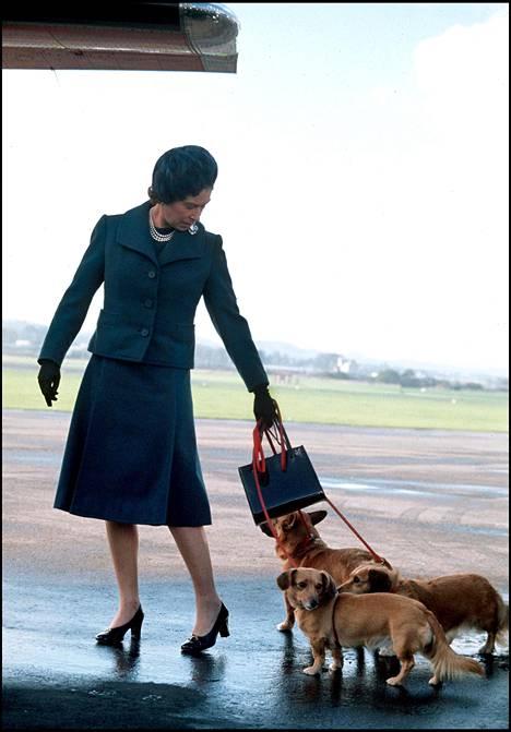 Elisabet sai ensimmäisen corginsa Susanin 18-vuotiaslahjaksi vuonna 1945. Kuvasa kuningatar lemmikkiensä kanssa vuonna 1974.