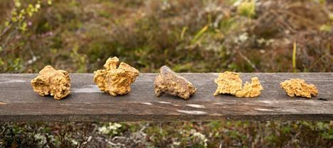 Vasemmalla 228 gramman Ukkoäijih, sen vieressä Ami Telilän löytämä 167,4-grammainen Suomi100 sekä pienemmät hiput, 93-grammainen sekahippu EiOo, 60 gramman Fossiili ja 48 gramman Haistakaa paska koko valtiovalta.