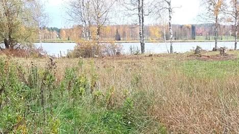 Puita kaadettiin luvatta Lempäälässä Kumpulankujan tuntumassa lähellä Vanajaveden rantaa. Aihekuva.