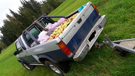 Omenat viedään metsään ruokintapaikoille ja tätä varten tehdyille asianmukaisille ruokintalaitteille.
