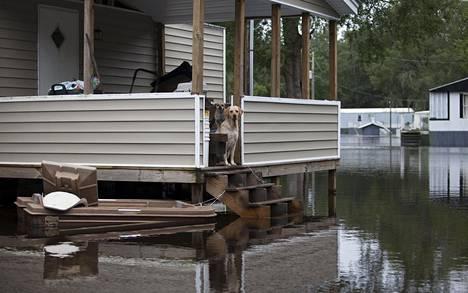 Tulvat ovat pakottaneet yli 800 eteläcarolinalaista jättämään kotinsa.