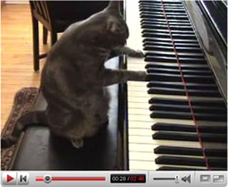 Pianistikissa Noran tassut pysyvät hyvin koskettimilla.