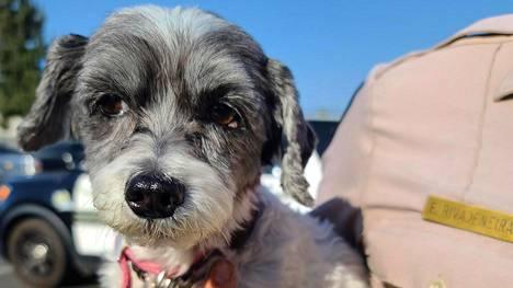 Boomer-koira pelastettiin kuumasta autosta.