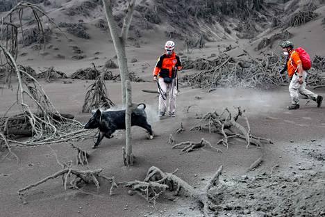 Pelastajat etsivät eläimiä Batangasissa.