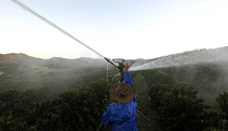 Brasilialainen kahvinviljelijä sääti sadetuslaitetta helmikuussa.