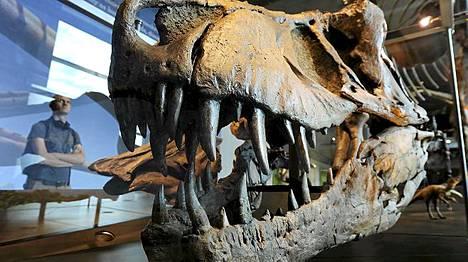 Tyrannosaurus rexin kallo on esillä Los Angelesissa.
