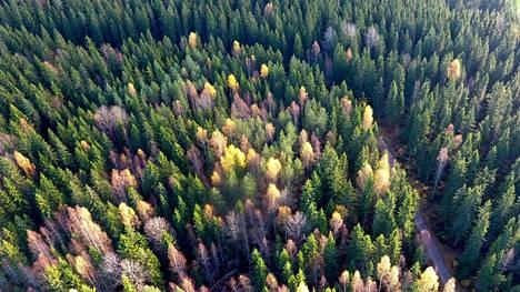 Suomalaisen energia-alan pelkäämät rajoitukset eivät edenneet, kun EU-parlamentti äänesti keskiviikkona uusiutuvan energian direktiivistä.