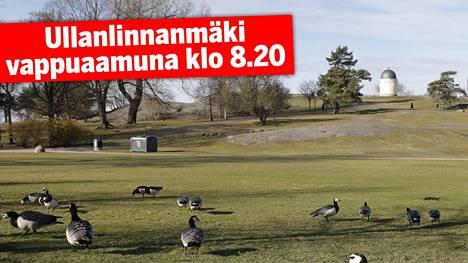 Kaivopuiston Ullanlinnanmäellä ei varhain vappuaamuna ollut kuin hanhia.