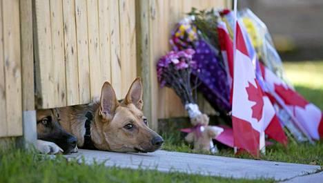Asemies tappoi keskiviikkona Nathan Cirillon ja hyökkäsi parlamenttiin pääkaupunki Ottawassa.