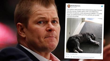 Jääkiekkovalmentaja Ari-Pekka Pajuluoma kertoi Risto-koiransa tilasta Twitterissä.