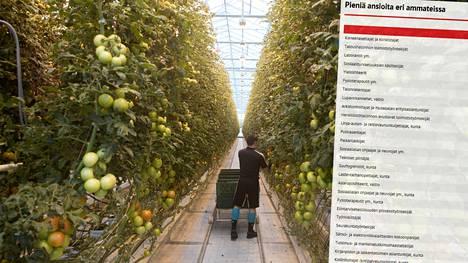 Puutarhojen avustavilla työntekijöillä on pienet kuukausiansiot.