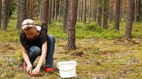 Sienten tunteminen on sekä hauskaa että hyödyllistä.