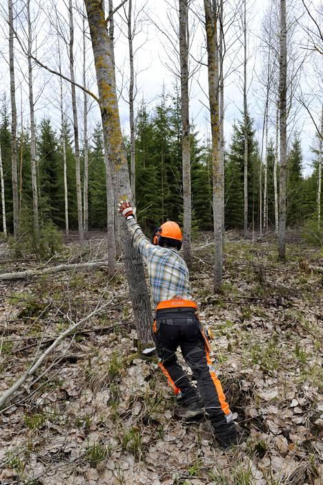 Ja eikun nurin! Tonteria harmittaa metsäkeskustelun sävy nyky-Suomessa.