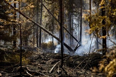 Pyhärannan metsäpalon sammutustöitä jatkettiin torstaina 19. heinäkuuta.