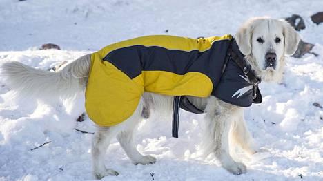"""Tällaista on koirien talvipukeutuminen – """"Kysyntä on kasvussa"""""""
